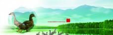 鸭子山水广告背景素材