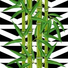 翠绿的竹子插画