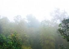 置身山雾中