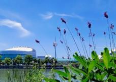 湖边水草  远映蓝天