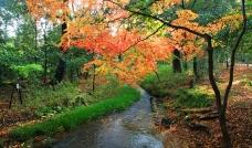 秋天的小溪