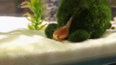 观赏鱼缸视频素材