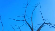 没有叶子的树杆蓝天视频