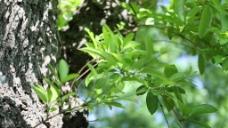 树枝叶子视频素材