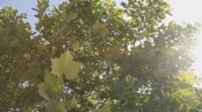 树阳光高清实拍视频