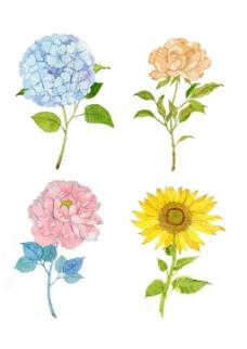 手绘小清新花绣球花向日葵牡丹花素材