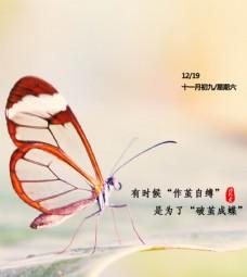 蝴蝶高清粉色背景