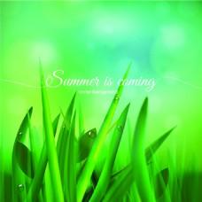 绿色草地上夏天自然矢量背景