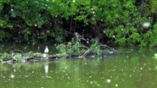 河边树木视频