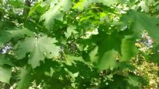 绿色叶子视频素材