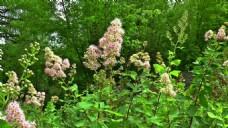 实拍花穗花卉视频