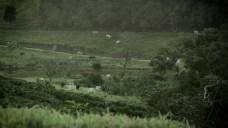 草坪风景视频