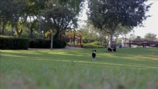 野外草坪公园视频
