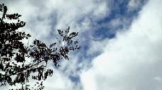 树枝白云视频素材