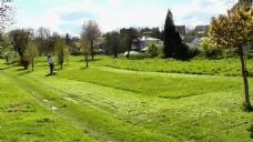 绿色草坪树木风景