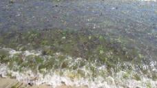 海滩海边视频素材