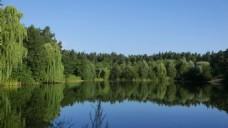 倒映树木风景视频