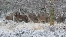 雪景森林动物风景视频