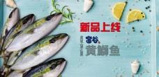 黄鰤鱼轮播图banner