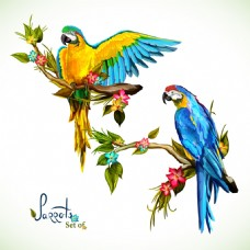 彩色美丽的鹦鹉插画