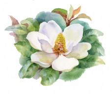 白色花朵水彩手绘矢量文件