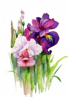 紫色粉色花束植物花朵水彩手绘矢量文件