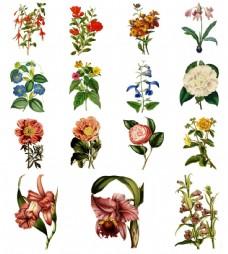水彩绘复古花朵插画