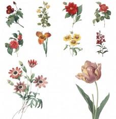 手绘复古植物花朵插画