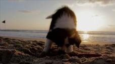 海滩边风景视频