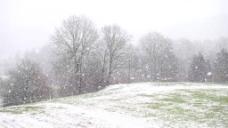 雪景树木风景视频素材