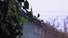 大雨过后的小镇视频