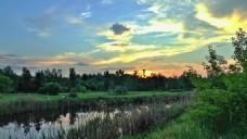 自然风光树木黄昏视频