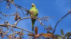 树枝上的鹦鹉小鸟视频