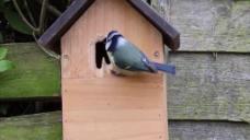 鸽子鸟儿视频素材