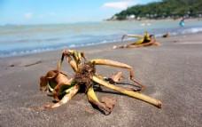 澳门黑沙滩 沙滩植物