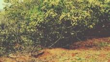 风景树叶树枝视频素材