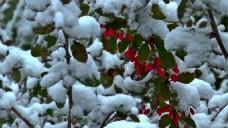 树枝积雪视频素材