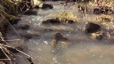 溪水水流视频素材