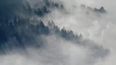 森林雾气自然风景