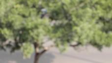 城市树木视频素材