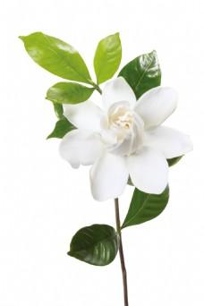 梦幻绿叶白色花朵元素