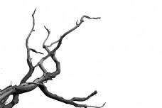 手绘树枝枯枝元素