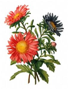手绘桔色菊花元素