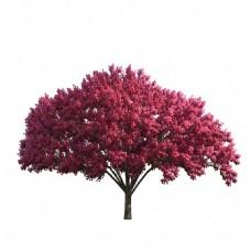 手绘红色树叶元素