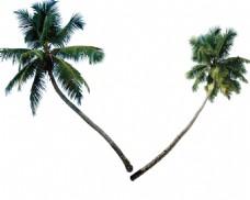 手绘歪脖子椰树元素