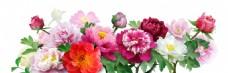 手绘牡丹花朵元素