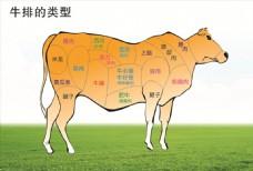 牛肉分布图