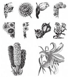 黑白手绘植物插画