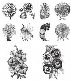 黑白手绘花朵插画