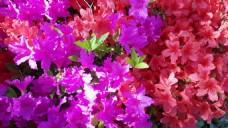 花卉视频素材